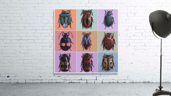 Assorted Beetles