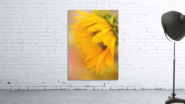 Bring Sunshine - Sunflower Art by Jordan Blackstone