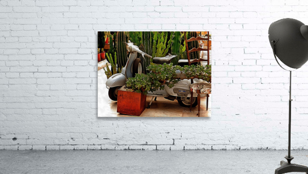 Vespa As Part Of Succulent Display