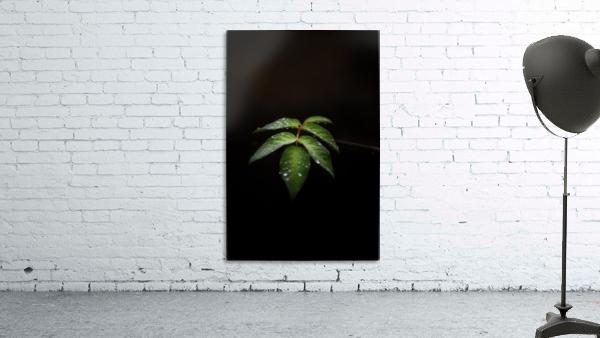 Isolation  Print