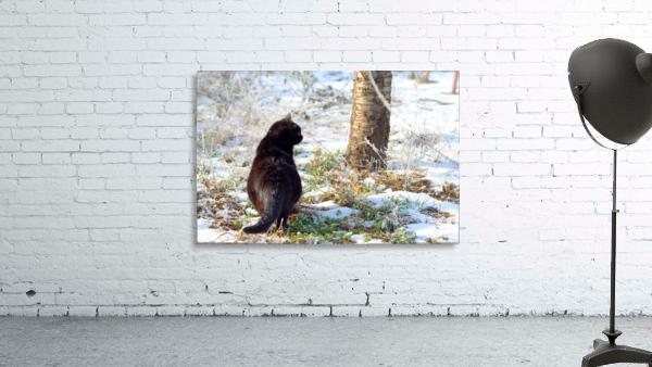 Cat in a sunny frozen garden