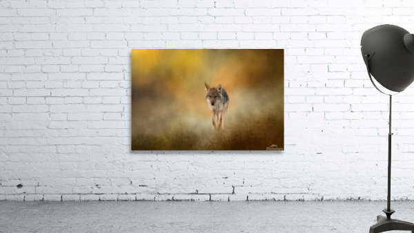 Strolling Coyote