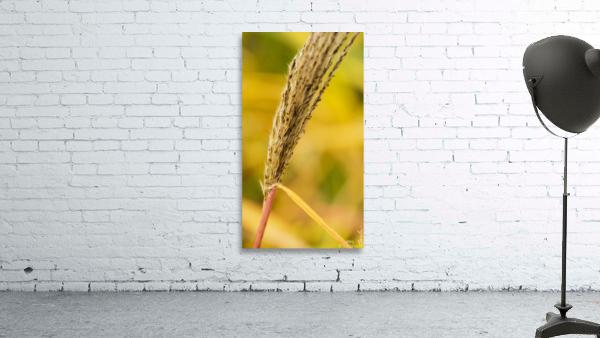 Flamboyantes Graminees no. 6 - Flamboyant Grasses no. 6