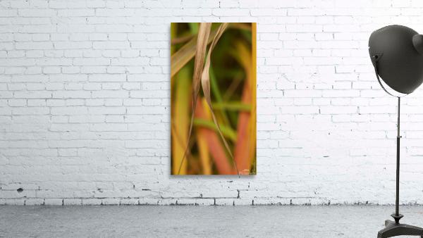 Flamboyantes Graminees no. 5 - Flamboyant Grasses no. 5