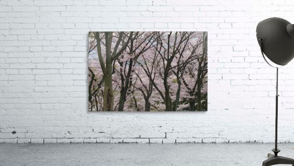 landscape_2_0949