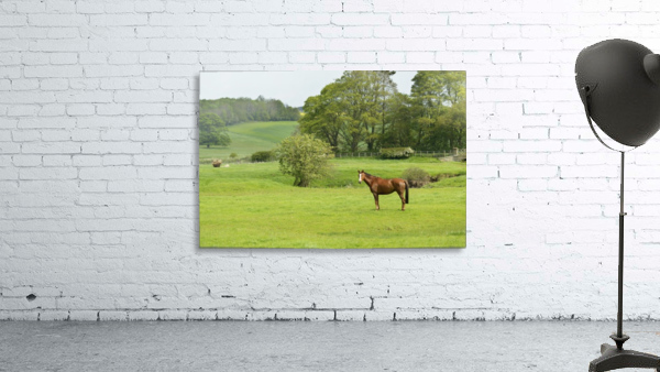 Horse in field; Morpeth, Northumberland, England