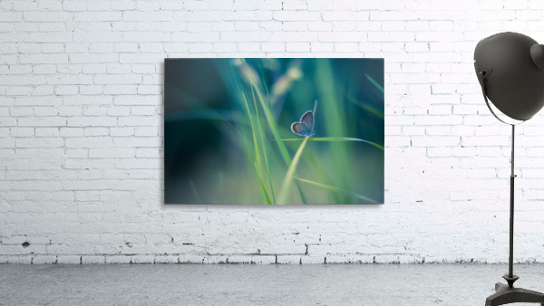 Butterfly summer background