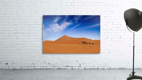 Desert Life ..