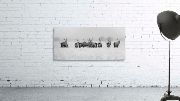 Oryx in the rain