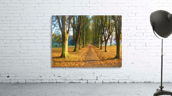 Autumnal Avenue