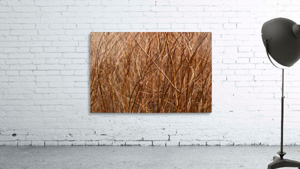 Abstract Background Branch Brown Color Flora
