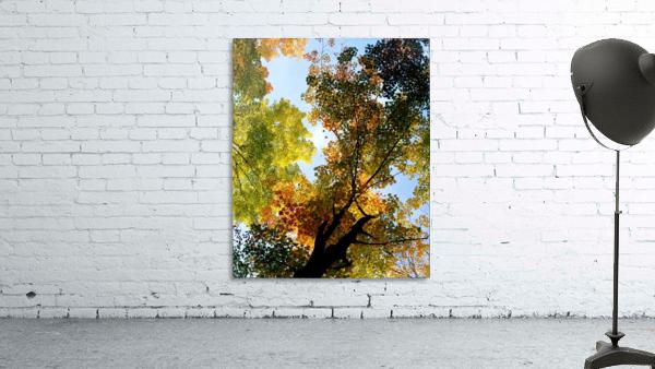 Autumn Trees Low-Angle