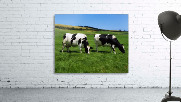 County Cork, Ireland, Dairy Cattle