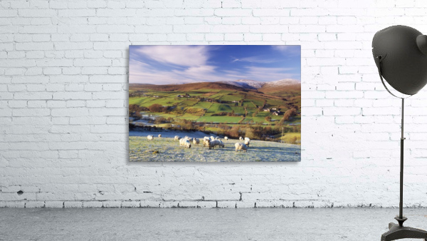 Sperrin Mountains, County Tyrone, Ireland, Sheep