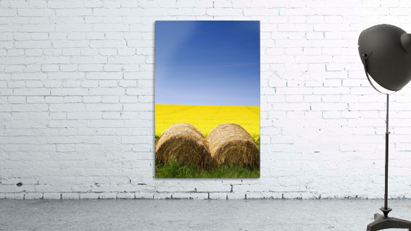 Hay Bales And Canola Field, North Yorkshire, England