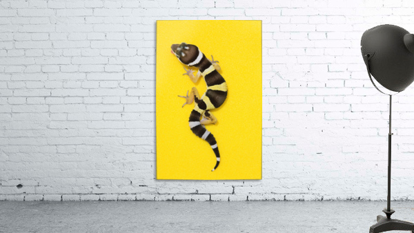 Baby Leopard Gecko On Yellow