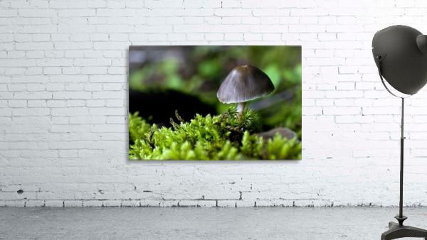 Closeup Of Mushroom