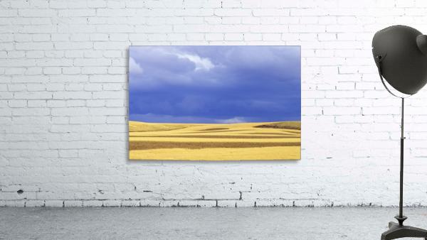 Wheat Fields Near Hermiston, Oregon, Usa