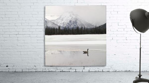 Winter Landscape, Banff National Park, Alberta, Canada