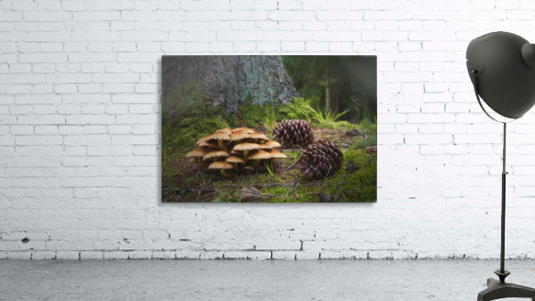 Mushrooms And Pine Cones On The Forest Floor; Northumberland, England