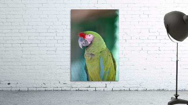 Close up of a parrot;Puerto vallarta mexico