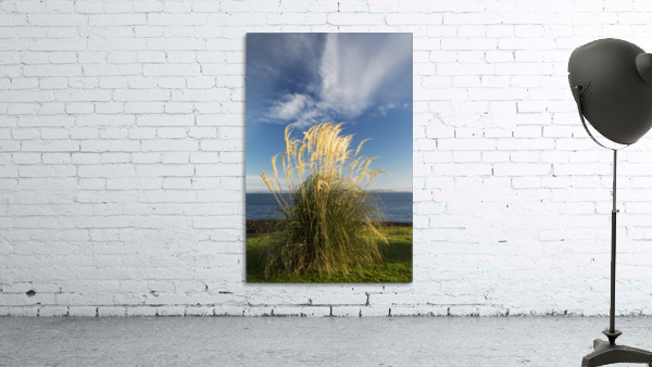 Tall grasses growing at the water's edge;Dumfries and galloway scotland