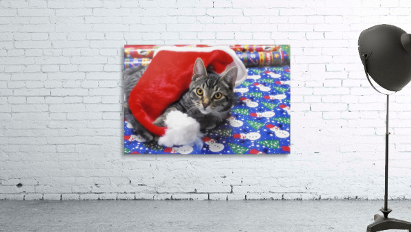 Grey tabby cat with santa claus hat lying on christmas gift wrap;Vancouver british columbia canada