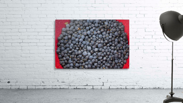 A bowl of blueberries;Alaska united states of america