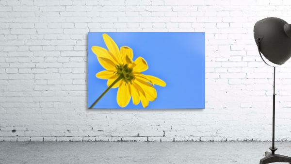 Yellow flower against a blue sky; Bolivia
