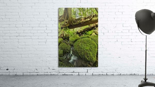 Rainforest in Avatar Grove near Tofino; British Columbia, Canada