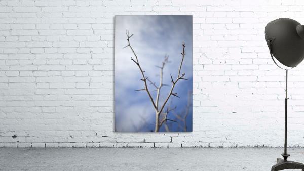 Tree with buds in springtime; Milton, Ontario, Canada