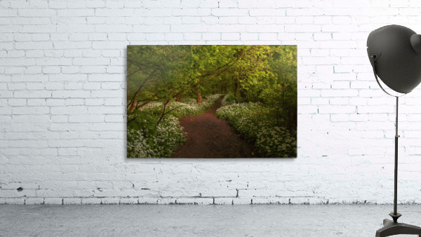 The Path to Fairytales, Ramsons Wood, Lancashire, UK