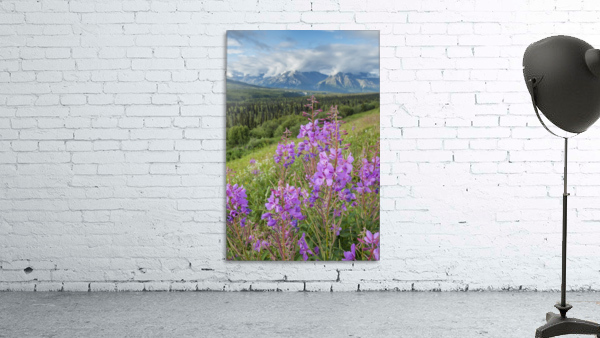 Scenic view of landscape near Palmer, Alaska, with Fireweed (Epilobium angustifolium) in the foreground, Southcentral Alaska, summer