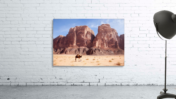 Baby camel and mother; Wadi Rum, Jordan