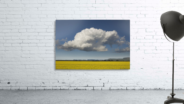 Canola field with blue sky and cloud; Thunder Bay, Ontario, Canada