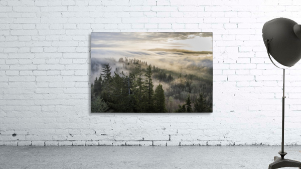 Fog and forest seen from Coxcomb Hill; Astoria, Oregon, United States of America