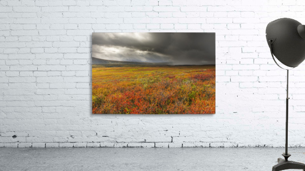 A storm passes over the bright colors of autumn in Denali National Park & Preserve, Alaska.