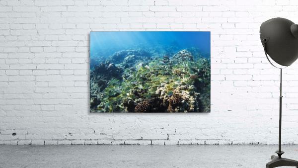 Tropical Reef in Hawaii-