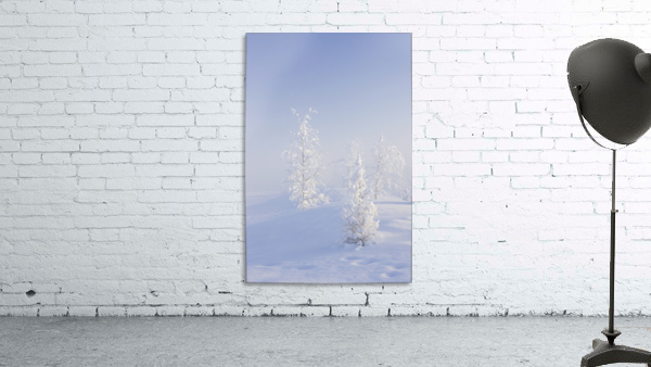 Scenic view of Birch trees in fog at sunrise, North Pole, Interior Alaska, Winter