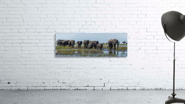 Panorama of elephants (Loxodonta africana) crossing shallow muddy river; Botswana