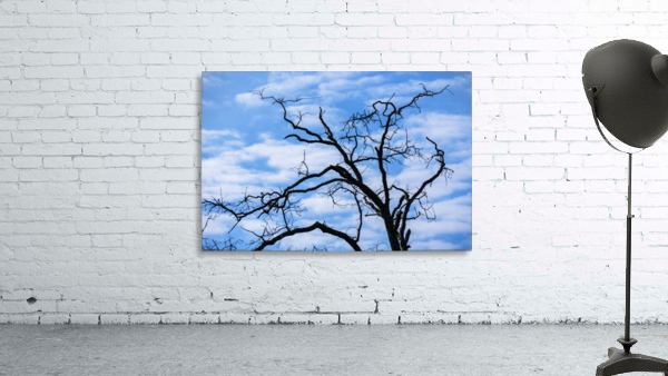 A dead tree is silhouetted against the sky; Tahlequah, Oklahoma, United States of America