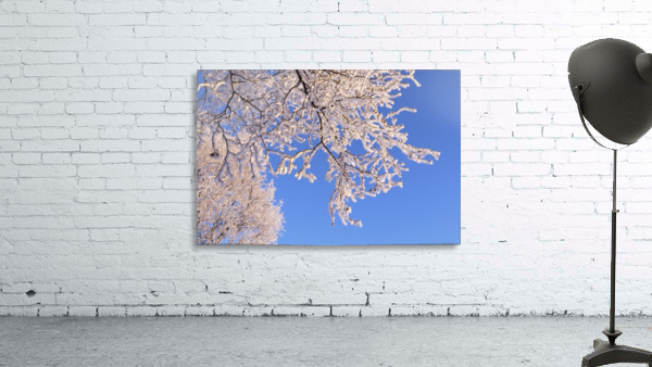 Hoar frosted tree branches against a blue sky; Anchorage, Alaska, United States of America