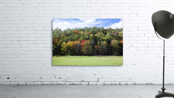 Colourful trees in autumn; Woodstock, Vermont, United States of America