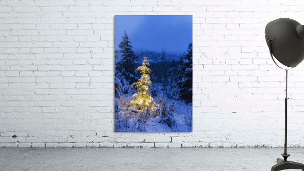 A festive Mountain Hemlock evergreen tree strung with white lights and covered in snow in a wintery landscape, Kenai Mountains; Moose Pass, Alaska, United States of America