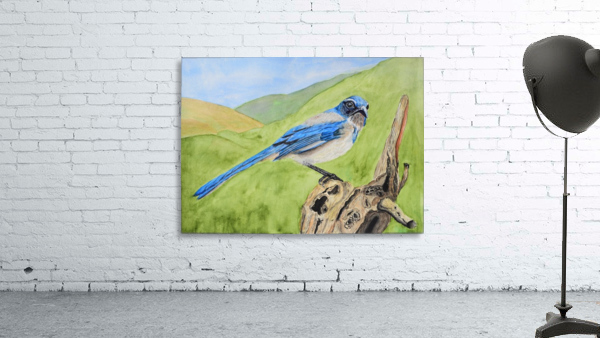 Blue Scrub Jay On Dead Tree