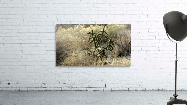 Shimmering  Cactus VP1