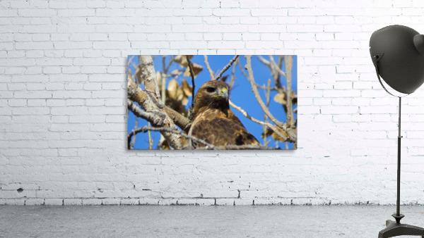Golden Eagle VP3