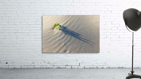 Evening Shadows on Dune