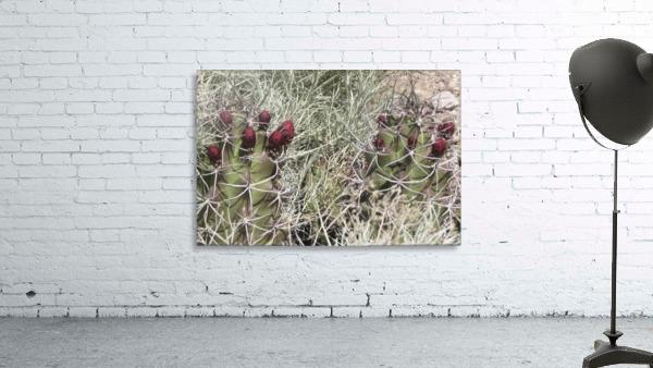 Cactus Flower VP2