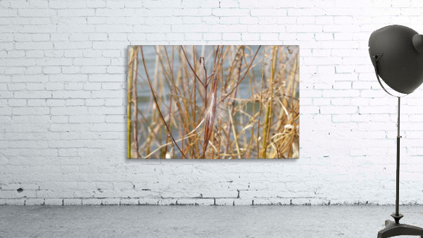 Feather in Reeds at the Glenn VP3